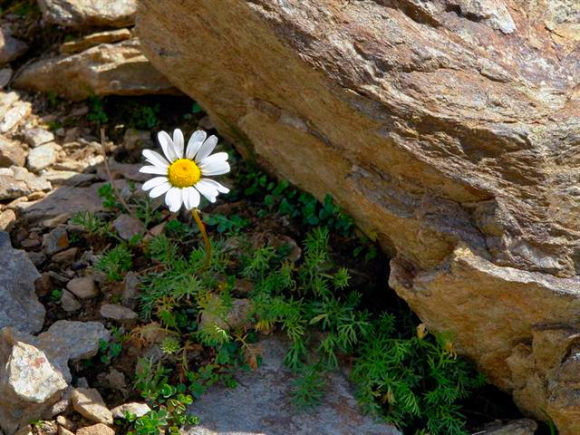 beautiful natural stones flowers rock art nature landscape colors
