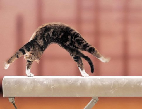 gymnast baby cat exercise stretch sport work out training